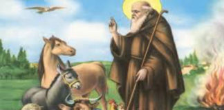 Samugheo: Programma 16 Gennaio:Sant'Antonio Abate 2019